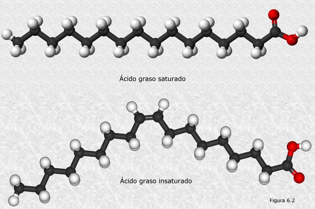 Acidos-grasos-tipos