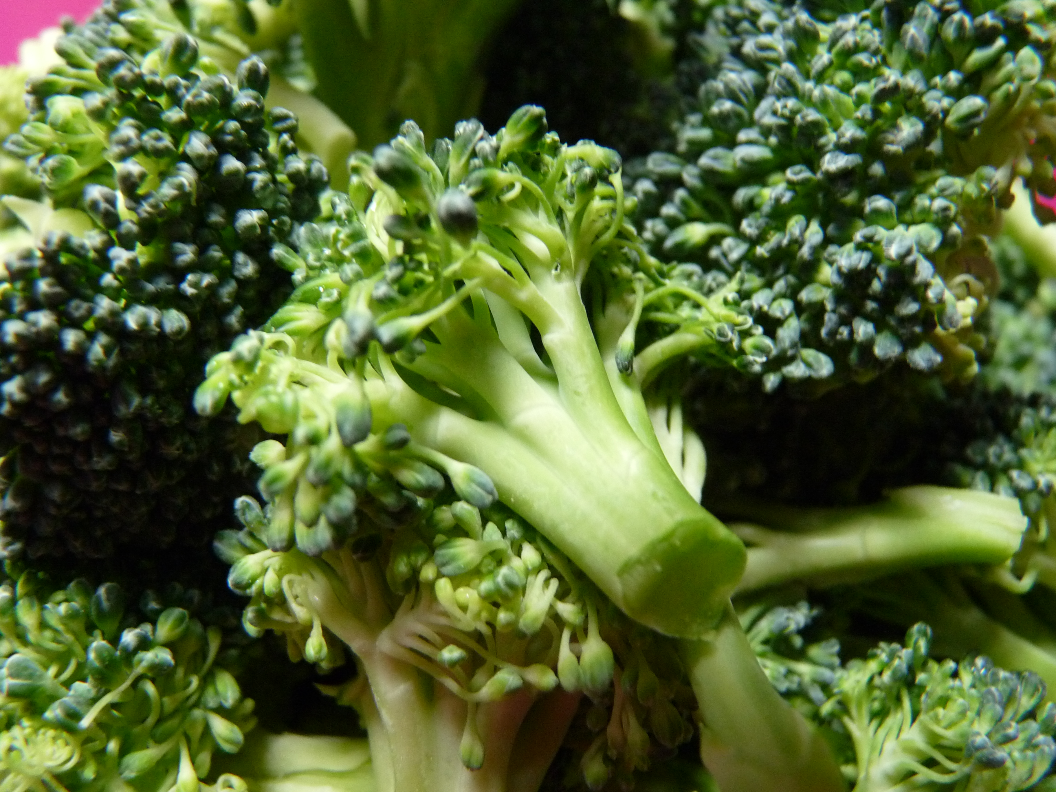 brocoli-en-arbolitos